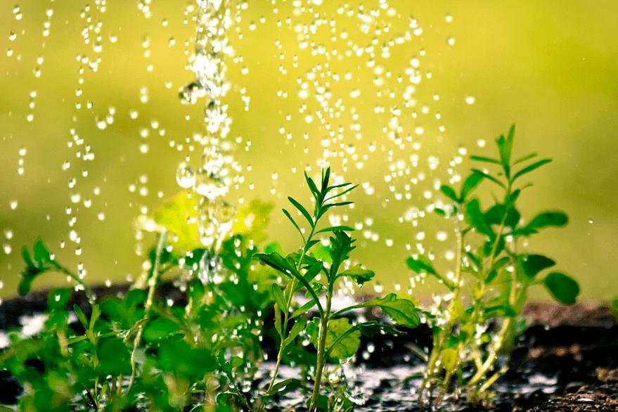 La estrategia de cuidar el jardín para ganar en calidad de vida.