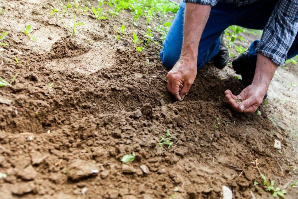 Los cultivos se ven afectados por la alta contaminación.