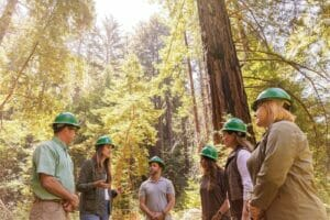 HP cuidará los bosquees del planeta gracias a un acuerdo con WWF.