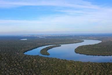 HP quiere proteger la biodiversidad de los bosques.