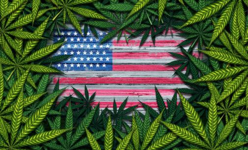 The Budders busca hacerse un hueco en la industria del cannabis: la nueva revolución verde