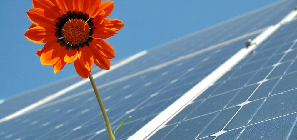 Amazon anuncia su primer gran proyecto de renovables en España