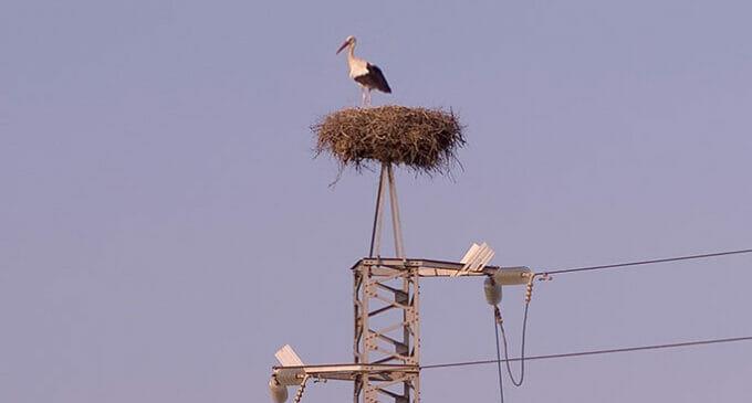Endesa y Andalucía, comprometidas por la biodiversidad