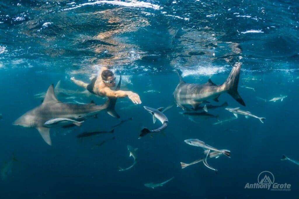Pablo Fernández tiburones