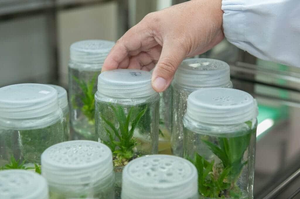 proyectos de biotecnología