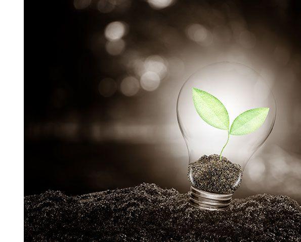 sostenibilidad medioambiental.