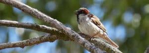 SUEZ y el cuidado de la biodiversidad
