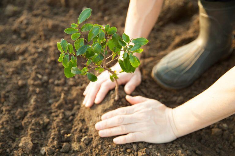HP reforestacion bosques verdes